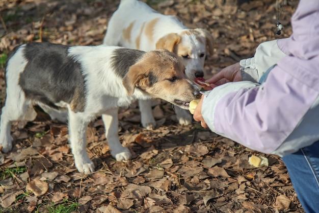 Vrouw geeft dakloze honden eten.
