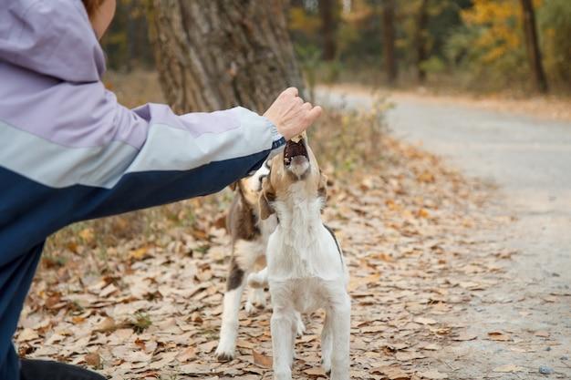 Vrouw geeft dakloze hondenvoer. vrouw hand voederen van de hond buiten.