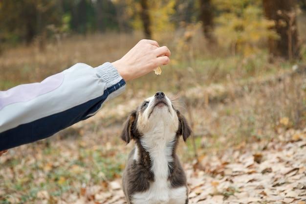 Vrouw geeft dakloze hondenvoer. vrouwenhand die de hond in het park voedt.