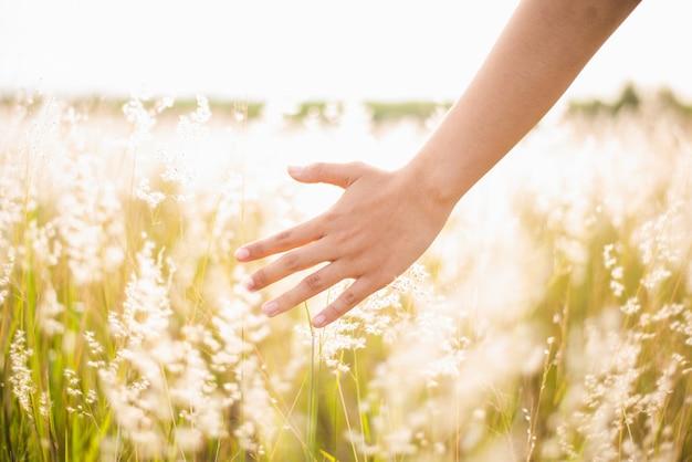 Vrouw geniet van grasbloem in weide bij zonsondergang
