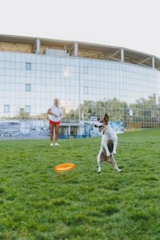 Vrouw gooit oranje vliegende schijf naar kleine grappige hond, die hem op groen gras vangt. kleine jack russel terrier huisdier buiten spelen in het park. hond en eigenaar op open lucht.