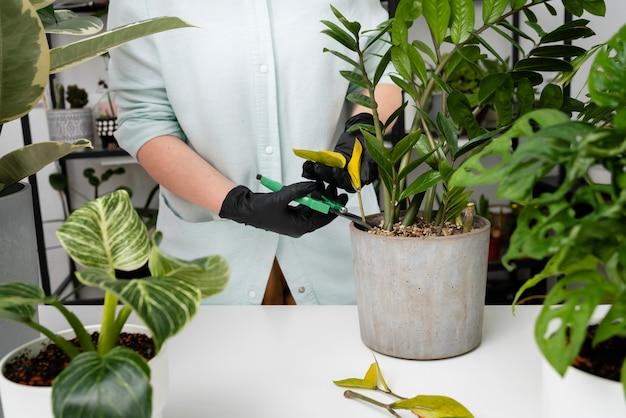 Vrouw groeiende planten close-up