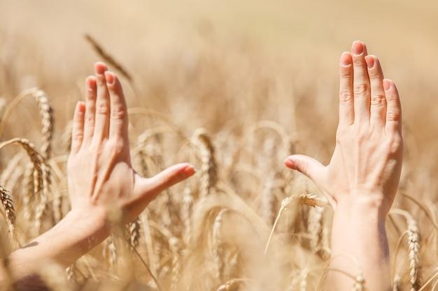 Vrouw hand aanraken van tarwe oren op het veld