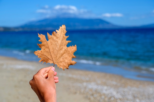 Vrouw hand met oranje blad op het strand in asprovalta, griekenland