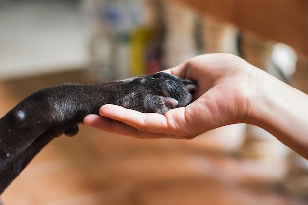 Vrouw hand met poot van zwarte hond. dierlijk en menselijk vriendschapsconcept.