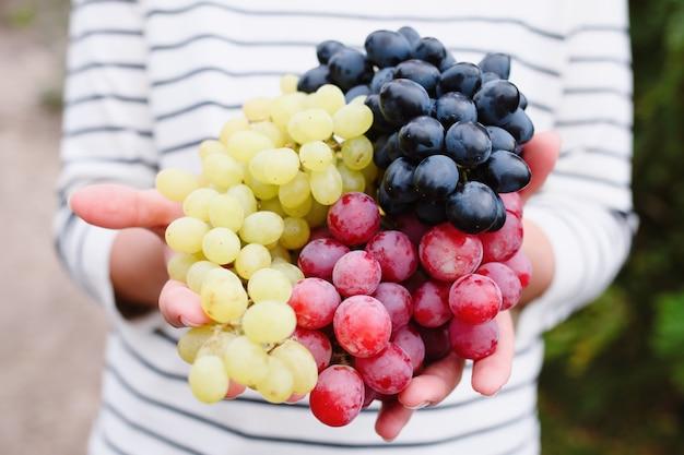 Vrouw hand met veelkleurige druiven