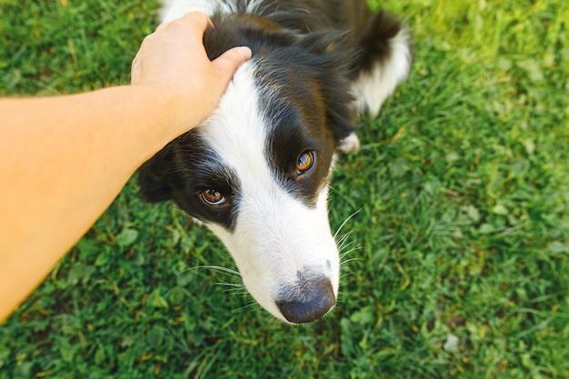 Vrouw hand strelen puppy hondje bordercollie in zomertuin of stadspark buiten