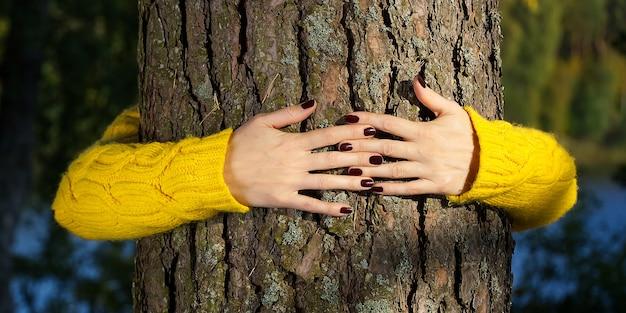 Vrouw handen knuffelen dennenboomstam in herfst bos ecologie en milieu concept, eco levensstijl