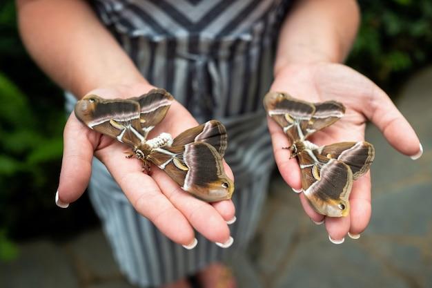 Vrouw handen met levende vlinders