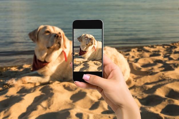 Vrouw handen met mobiele telefoon om een foto te maken van een labrador hond liggend op het zand. hond labrador op het strand
