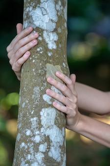 Vrouw handen vasthouden en knuffelen boomschors en boomstam om dichter bij de natuur te voelen