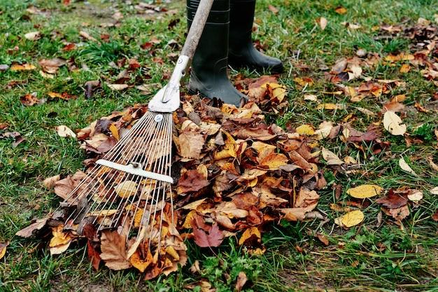 Vrouw harkt stapel herfstbladeren in de tuin met hark