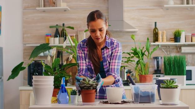 Vrouw herplant bloemen in grotere bloempot zittend in de keuken. tuinman plant bloemen in witte keramische pot met schop, handschoenen, vruchtbare grond en bloemen voor huisdecoratie.