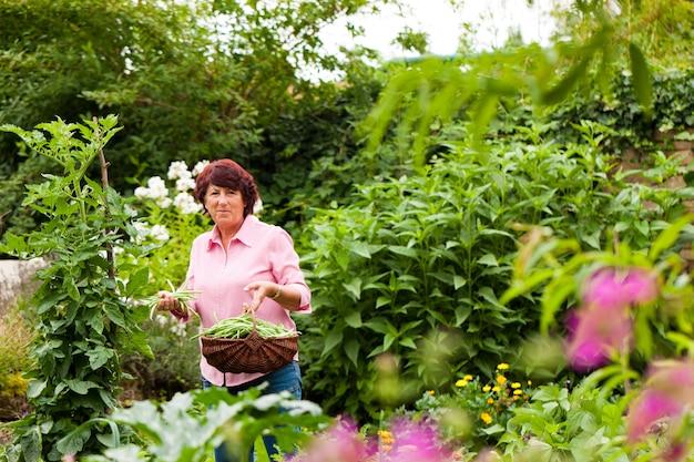 Vrouw het oogsten bonen in haar tuin