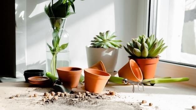 Vrouw het verzorgen van verschillende huis vetplanten