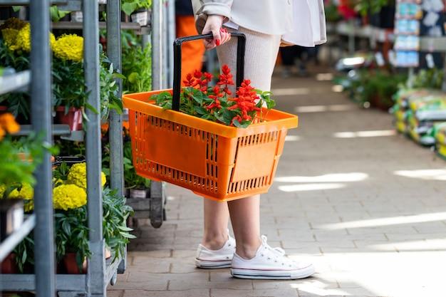 Vrouw houdt een boodschappenmand met een plant met rode bloemen voor haar huis / appartement in een kas of bloemenwinkel