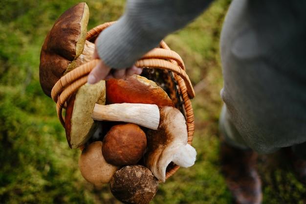 Vrouw houdt een mand met verse paddenstoelen in het bos en oogst eetbare boletus kopieerruimte