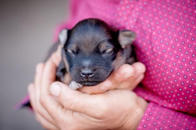 Vrouw houdt een pasgeboren baby puppy in haar handen