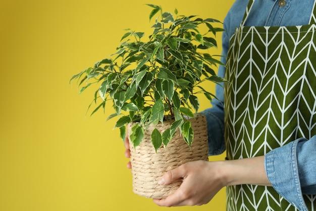 Vrouw houdt rieten pot met plant op gele achtergrond