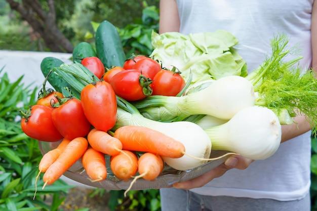 Vrouw houdt salade-ingrediënten, sla, tomaten, komkommers, venkel, lente-uitjes en wortels