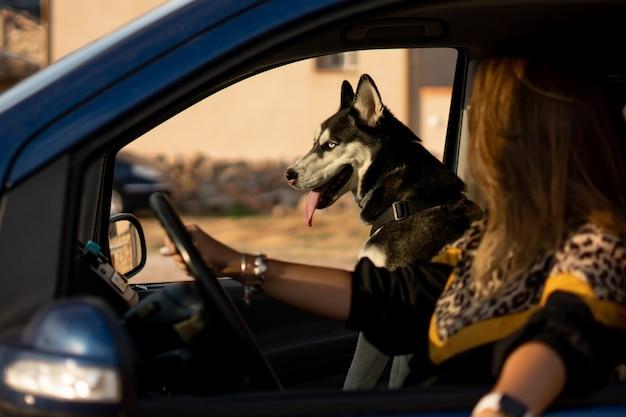 Vrouw in voertuiginterieur met haar siberische husky-hond.