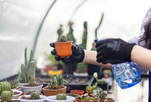 Vrouw kijkt naar cactus in kastuincentrum, aziatische jonge vrouw kijkt naar kleine cactus