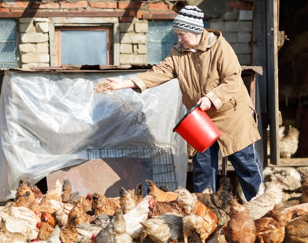 Vrouw kippen voederen op een boerderij graan