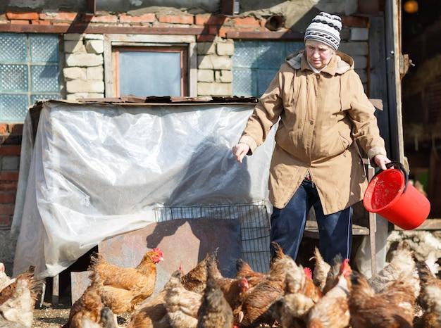 Vrouw kippen voederen op een boerderij in de lente