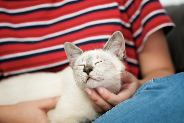 Vrouw knuffel cute cat. vriendschap dierenvriend. vertrouw liefde vriend van de mens.