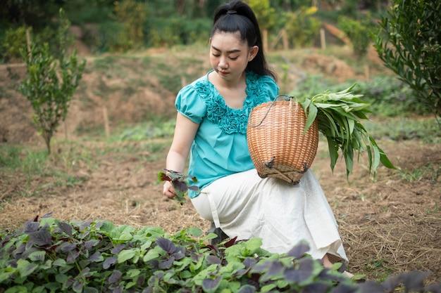 Vrouw met een mand met vers geoogste spinazie