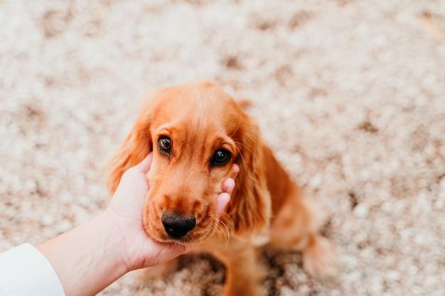 Vrouw met hoofd van schattige puppy cocker spaniel hond. liefde voor dieren concept