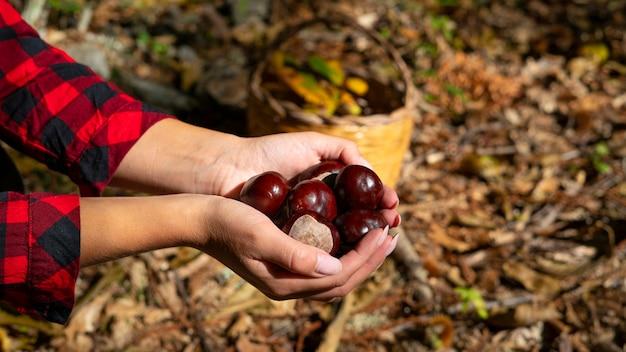 Vrouw met kastanjes en een mand met kastanjes in het bos, sardijnse kastanjes, matte kastanjes