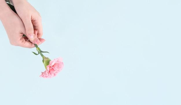 Vrouw met roze anjer over blauwe tafel achtergrond