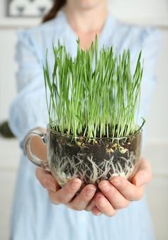 Vrouw met transparante pot met vers groen gras