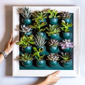 Vrouw met veel vetplanten op de muurplaat