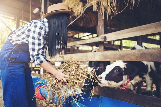 Vrouw of boer met en koeien in stal op melkveebedrijf-boeren
