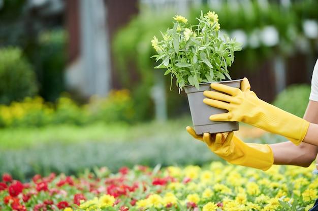Vrouw op jacht naar planten