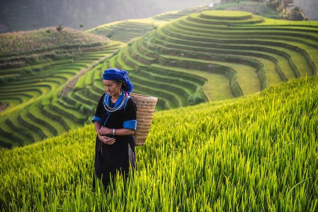 Vrouw op rijst terrasvormig gebied vietnam