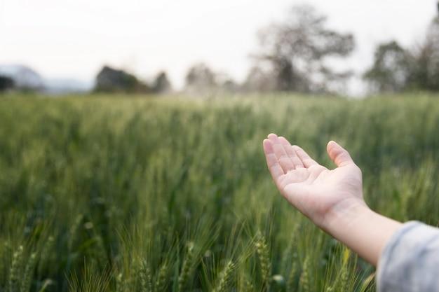 Vrouw open hand omhoog over het groene gebied van gerst. sfeervol authentiek moment. stijlvol meisje genieten van rustige avond in platteland. kopieer ruimte. landelijk langzaam leven