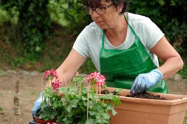 Vrouw oppotten geranium bloemen