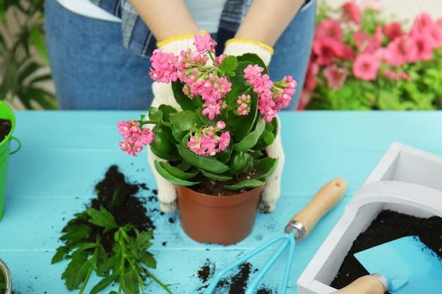 Vrouw plant bloem in pot op houten tafel