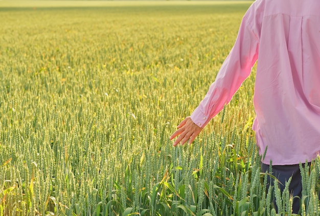Vrouw raakt de korenaren aan met haar hand, de ondergaande zon over het tarweveld, lente de graanoogst in het veld. ruimte kopiëren, natuurlijke achtergrond