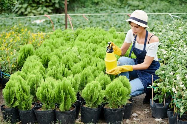 Vrouw sproeien van water op cipressenplanten