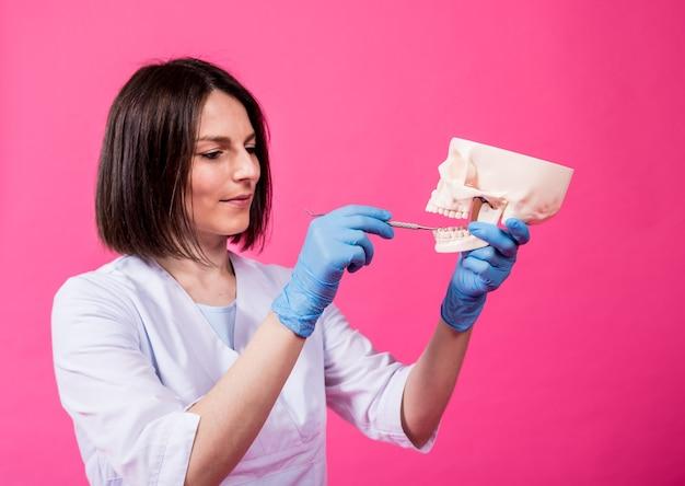 Vrouw tandarts onderzoekt de mondholte van de kunstmatige schedel met steriele tandheelkundige instrumenten