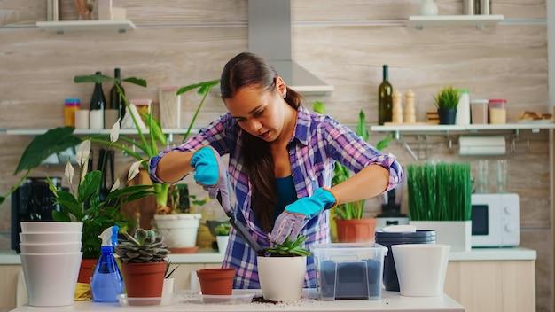 Vrouw thuis tuinieren in de ochtend in een gezellige keuken die rotzooi op tafel maakt. bloemist herplant bloemen in witte keramische pot met schop, handschoenen, vruchtbare grond en bloemen voor huisdecoratie.