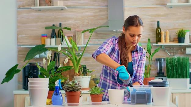 Vrouw transplanteert een kleine vetplant in een keramische witte pot. tuinmanvrouw die vruchtbare grond in een bloempot giet, de plant opnieuw plant, schop, handschoenen en kamerplant gebruikt voor huisdecoratie.