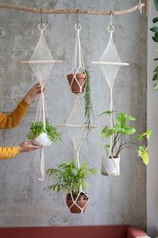Vrouw tuinman macrame plant hanger met kamerplant houden over grijze muur