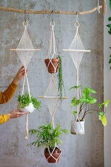 Vrouw tuinman macrame plant hanger met kamerplanten houden over grijze muur thuis