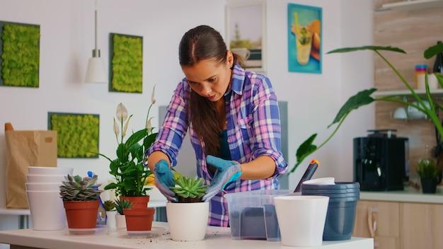 Vrouw tuinman regelen van de vetplant in witte keramische bloempot. bloemist herplant bloemen in de keuken, op tafel met schop, handschoenen, vruchtbare grond en kamerplanten voor huisdecoratie.