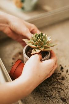 Vrouw tuinman sappig planten in pot
